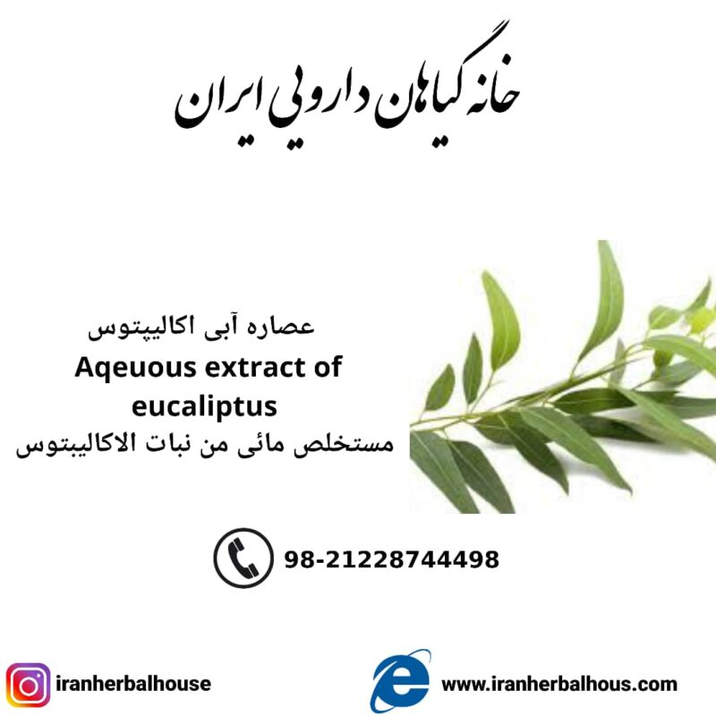 aqeuous extract eucaliptus
