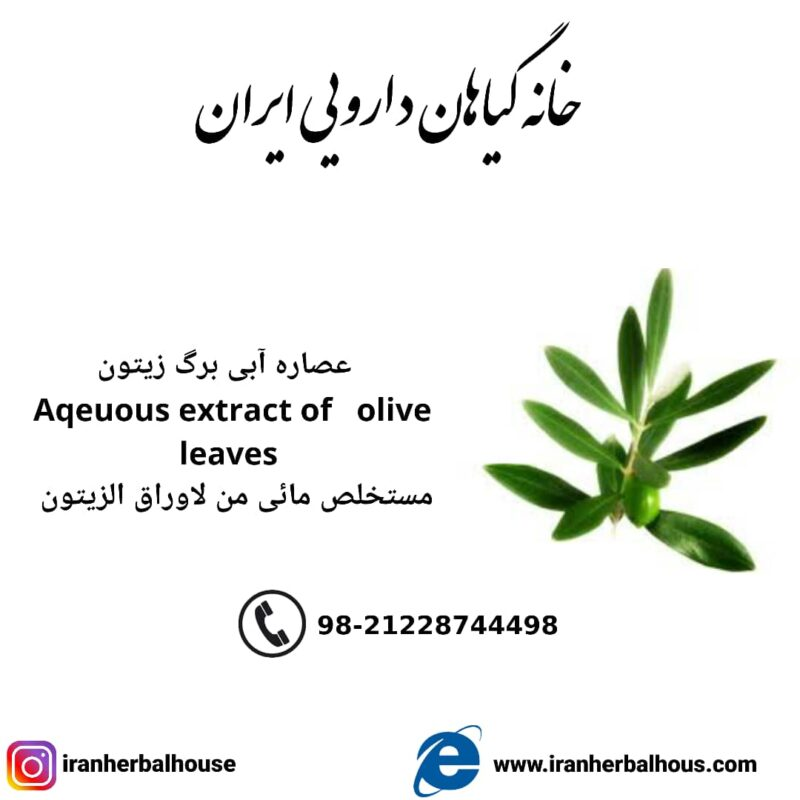 Aqeuous Extract of olive leaves