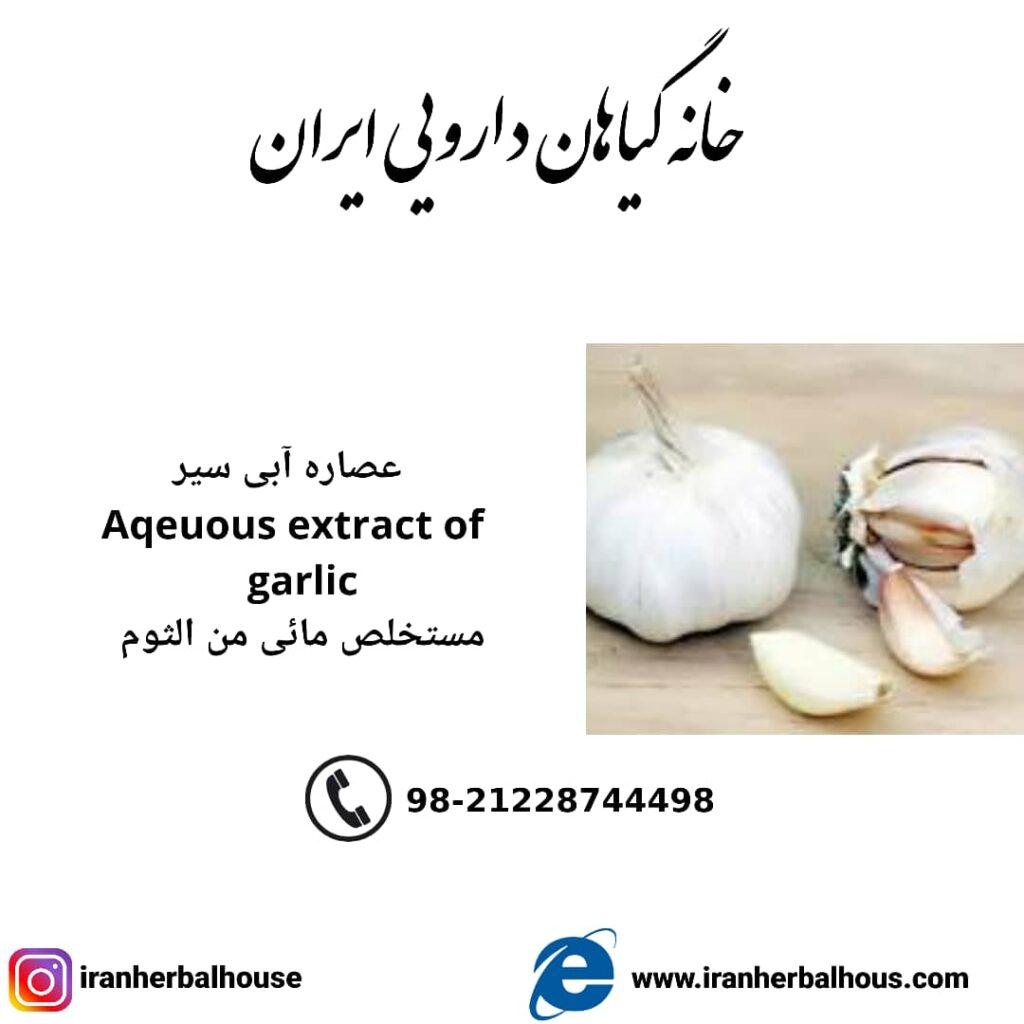 Aqeuous Extract of garlic