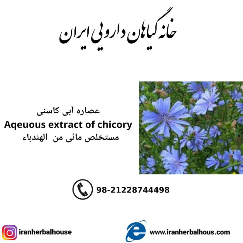 Aqeuous Extract of chicory
