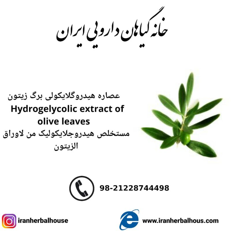 Hydrogelycolic Extract of olive leaves